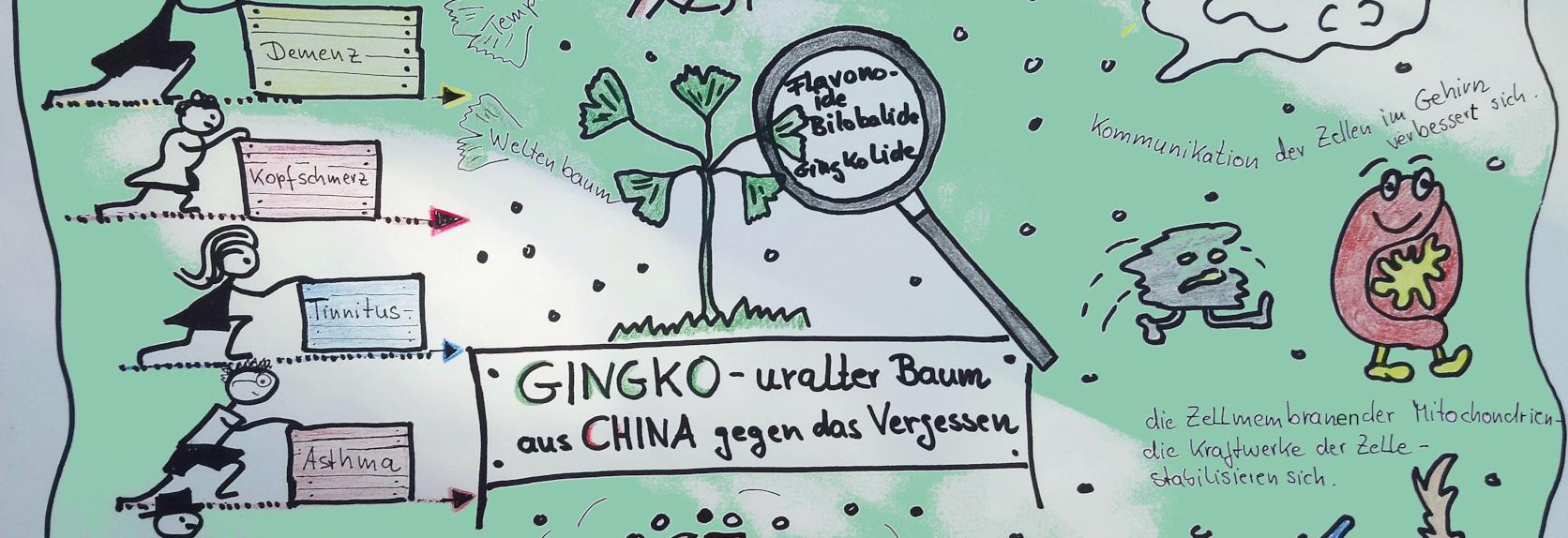 Apotheke Barlach Ginkgo